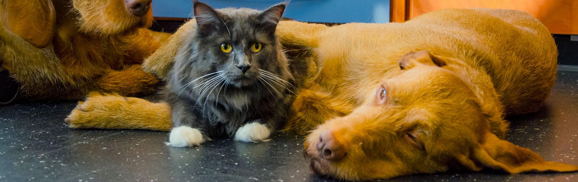 Informatie voor honden- en katteneigenaren