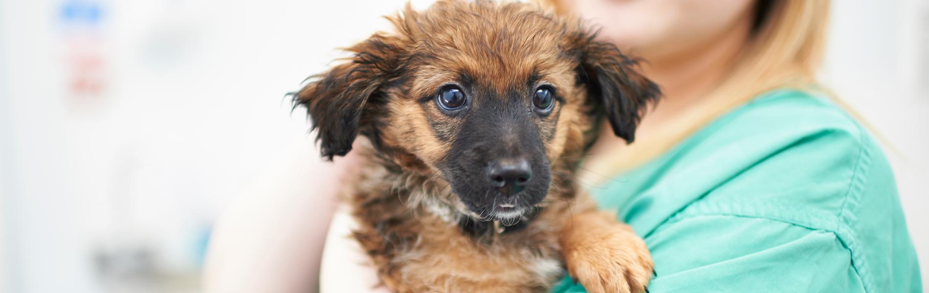 Informatie voor puppy-eigenaren