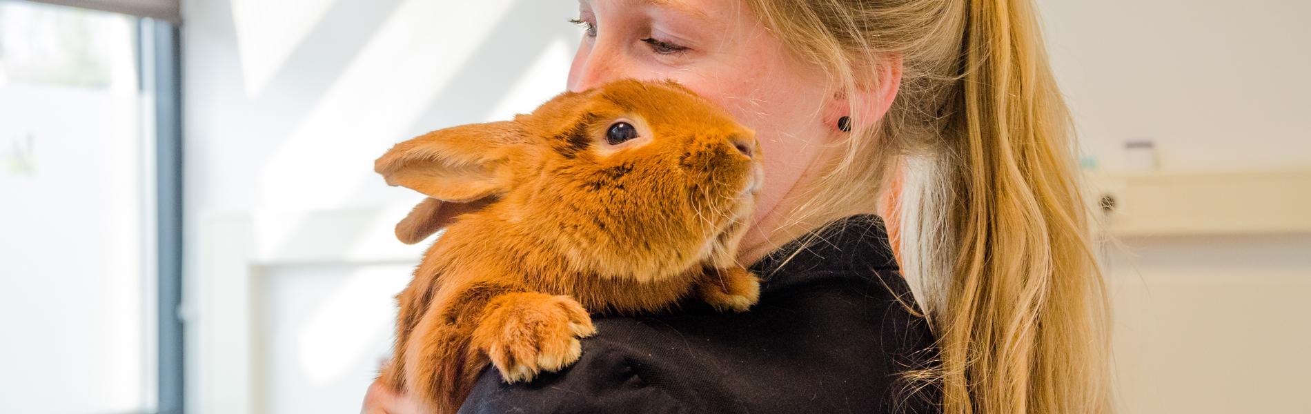 Castratie/sterilisatie bij het konijn