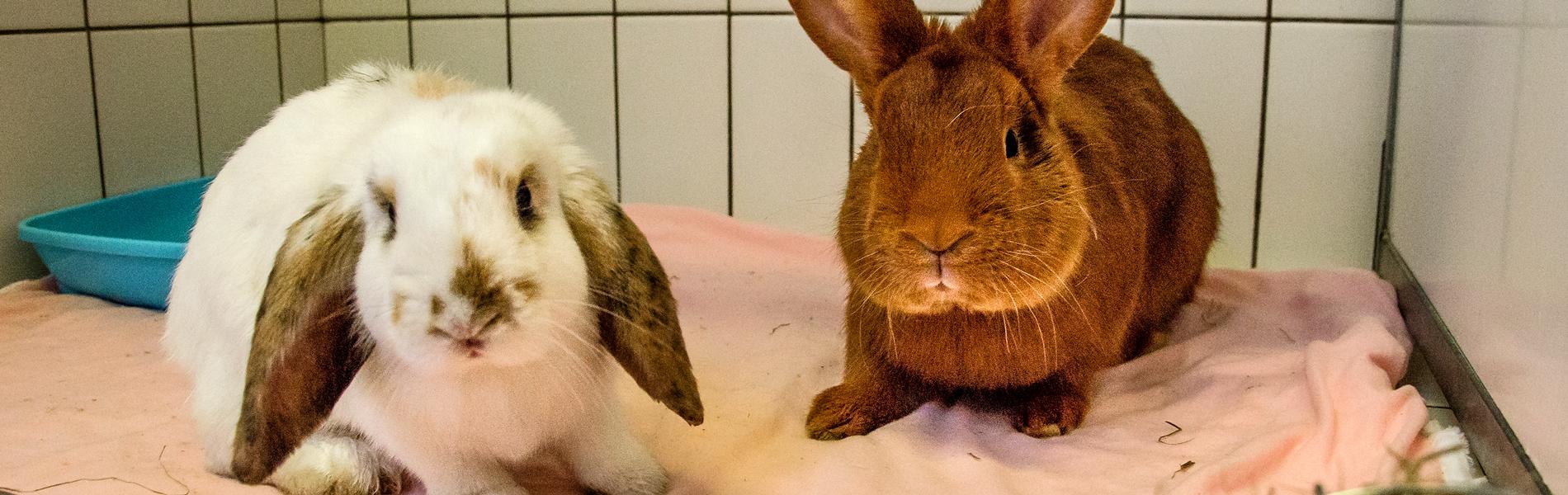 Informatie voor konijnen-eigenaren