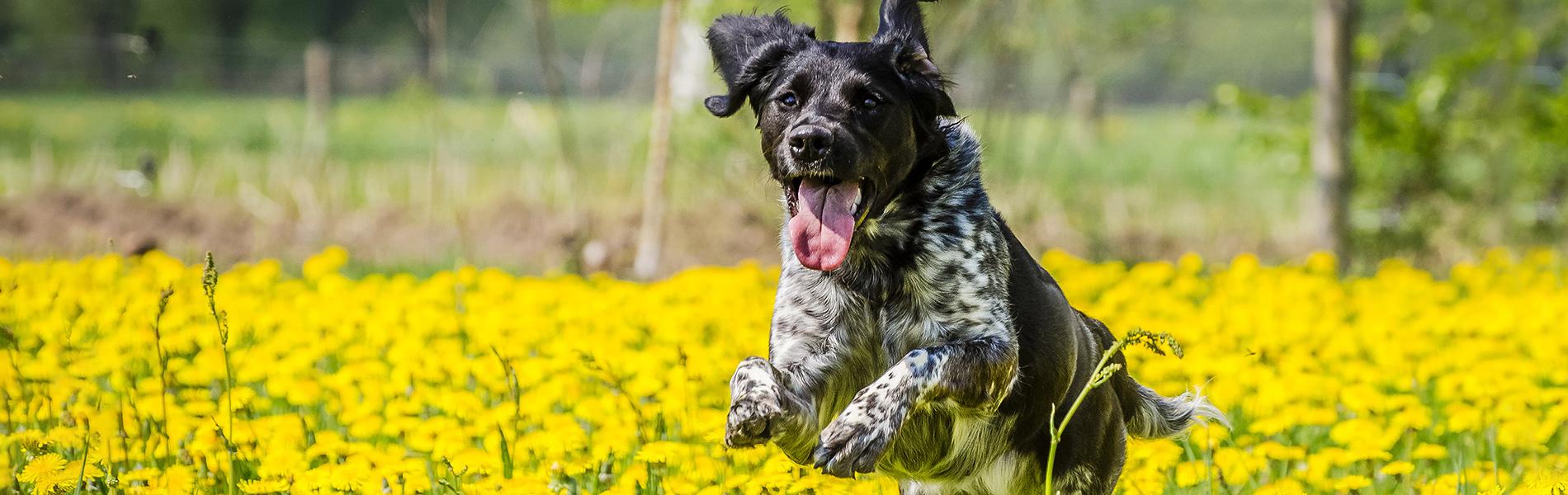 Sterilisatie en castratie hond