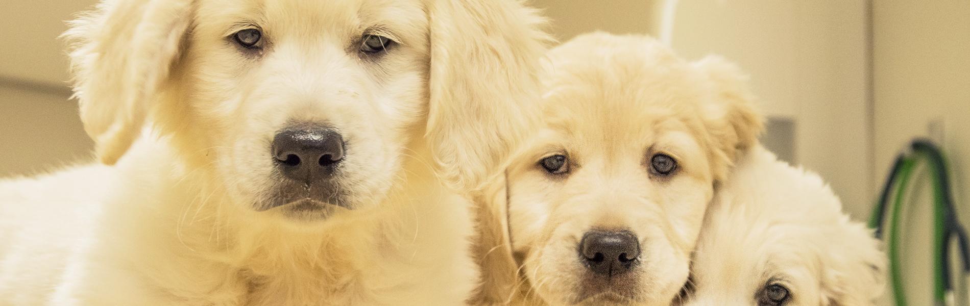 Puppy en kitten consultatiebureau