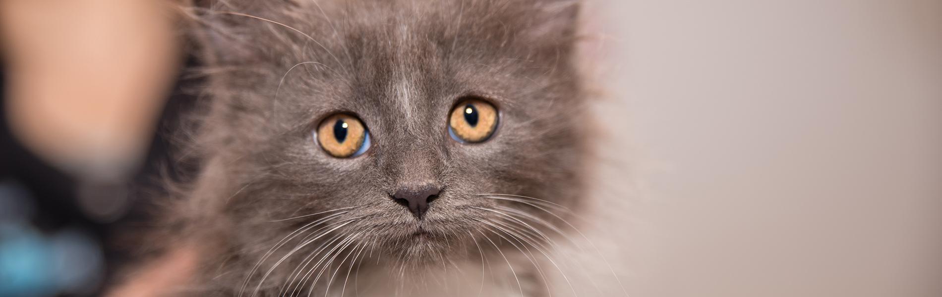 Informatie voor kitten-eigenaren